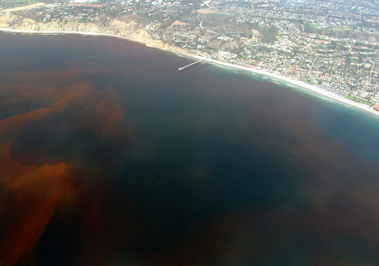 Red tide in La Jolla, CA, Aug. 2005. Photo by A. Diaz.