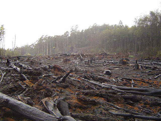 Global deforestation in the 20th century's final decade